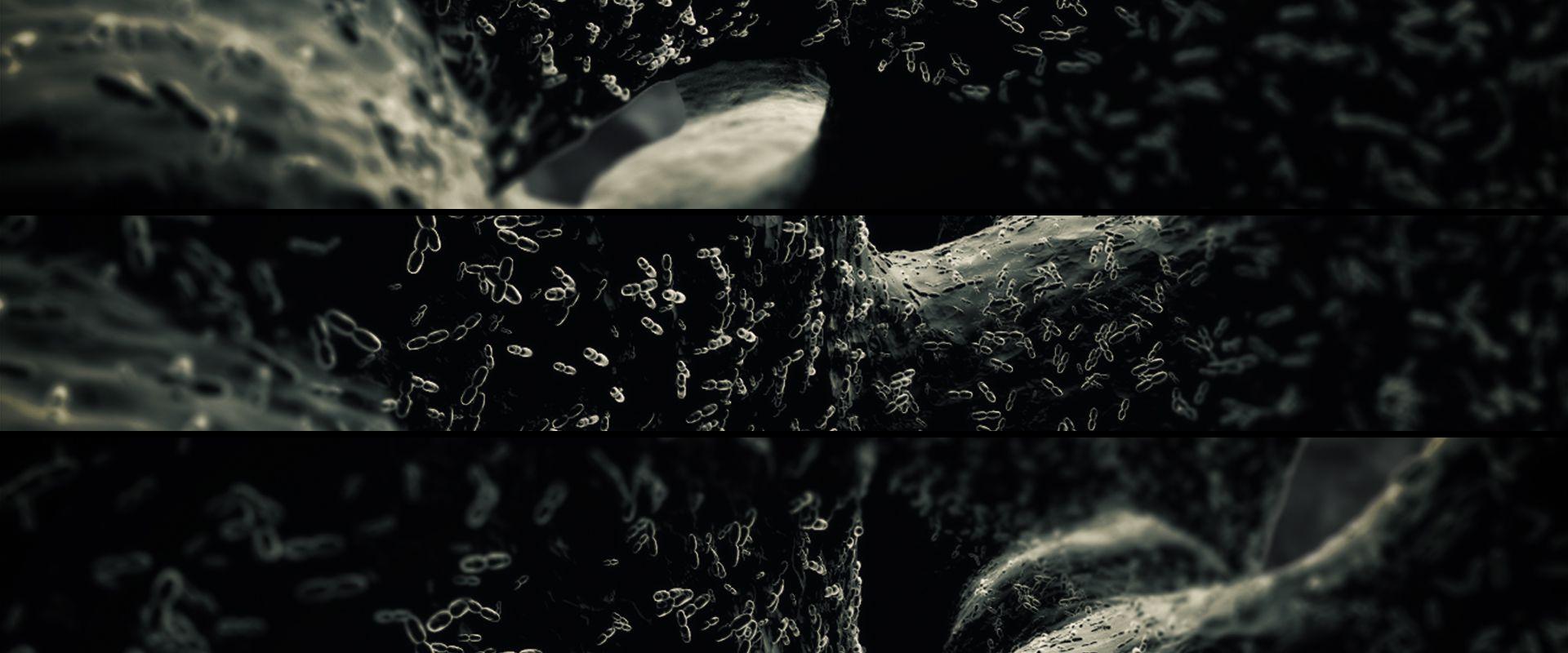 Bacteria_800_b